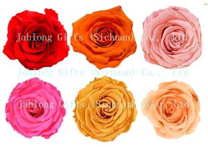 Best Valentine Day Gifts - Long Lasting Fresh Kept Real Roses 1