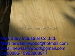 Rotary birch vener