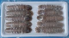 iqf cooked mantis shrimp in