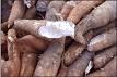 Dried cassava 1