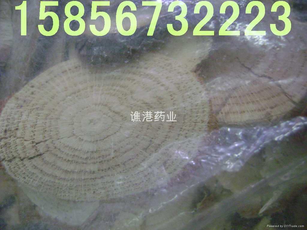 藤木树脂类 1