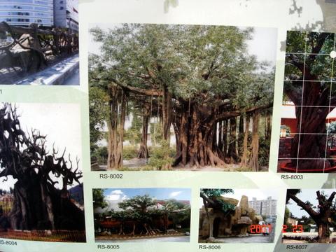 动物雕塑,海洋生物雕塑,仿古植物榕树雕塑,校园学校幼儿园雕塑浮雕