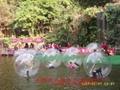 哇!!!水上步行球来了,刺激又好玩!!! 1