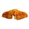 male silk moth extract