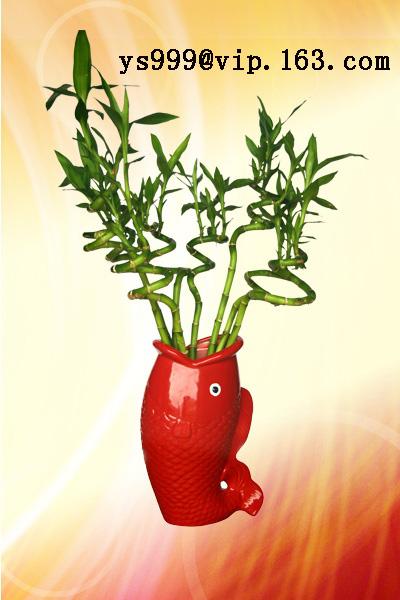 供應花瓶、精美花插、花盆 1
