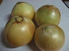 Yellow Onion in 2007 crop