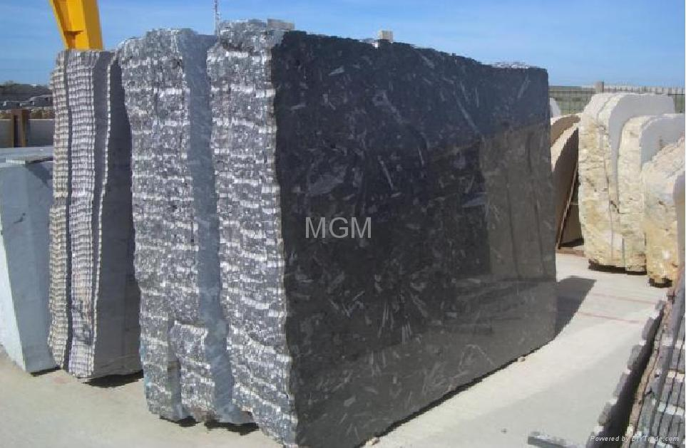 Black Fossil Limestone : Black fossil marble morocco manufacturer