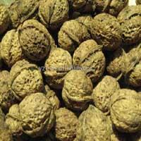 sell walnut 1