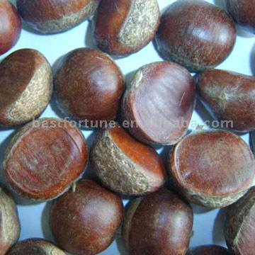 sell chestnut 1