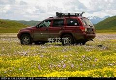 万人草原露营野花节