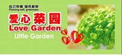菜园 无公害蔬菜 时尚种植 秘密小花园