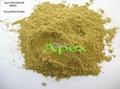 Senna Pods Powder 1