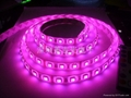5050 LED FPC软板灯 LED灯条 3
