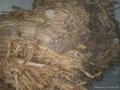 香蕉树皮 1
