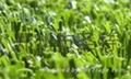 供应休闲人造草坪 2