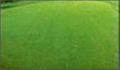 草坪專用肥 2