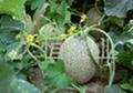 高純腐植酸有機肥