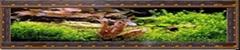 古典系列壁挂鱼缸