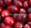 FD Cranberry