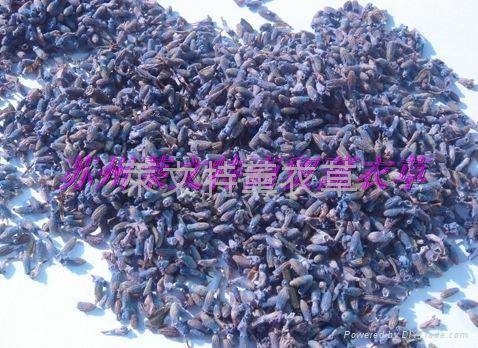 燻衣草(深藍07(特、1、2))級 2