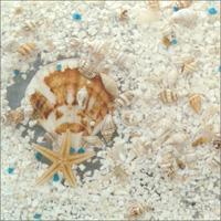Seashell Decorative Panel--DLHBBD