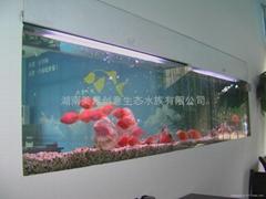 供应创意明典CY-QR嵌入式免换水生态水族箱 生态鱼缸