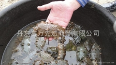 North Korea sea food