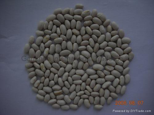 White Kidney Beans Japanese Shape 2