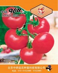 番茄种子中研968