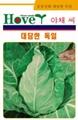 韩国牛心甘蓝种子--豪德