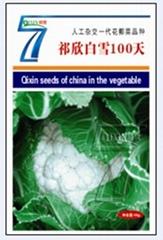 人工杂交花椰菜品种--祁欣白雪100天
