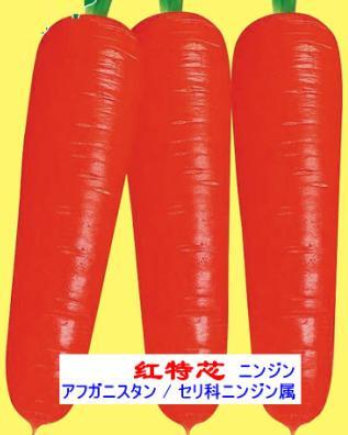 日本胡萝卜品种-红特芯 1