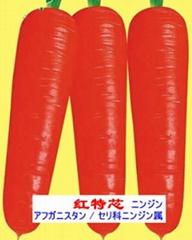 日本胡萝卜品种-红特芯