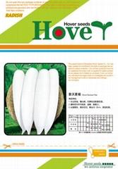 韩国耐热白萝卜品种--豪沃夏福