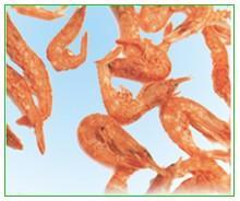 gammarus,red shrimp