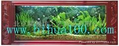 免换水生态壁画/生态鱼缸/壁挂式鱼缸