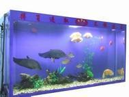 Acrylic fish tank 1
