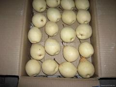 Shandong Ya Pear