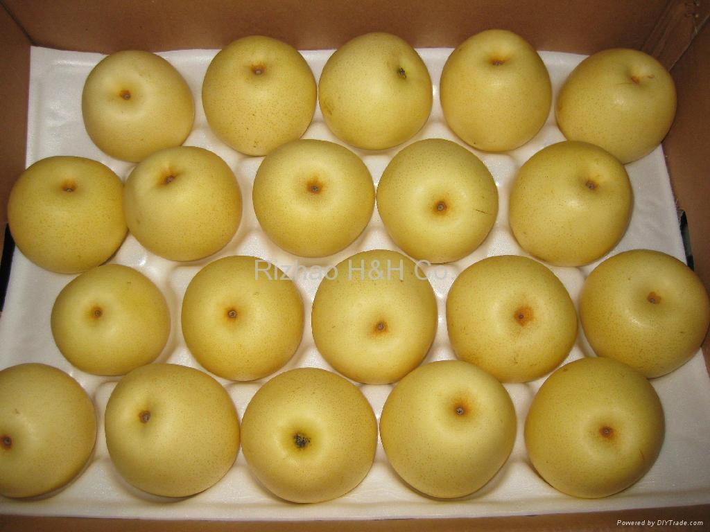 Shandong Ya Pear 2