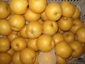 Shandong Ya Pear 3