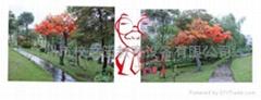 仿真紅楓樹