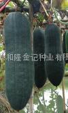 广东良种黑皮冬瓜种子99-1-100 2