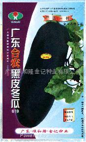 广东台农黑皮冬瓜种子619 1