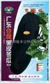 广东台农黑皮冬瓜种子619