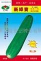 大吊瓜种子901