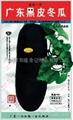 广东黑皮冬瓜种子628