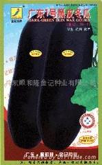 广东一号黑皮冬瓜种子98-9