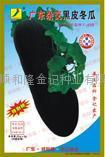 广东杂交黑皮冬瓜种子F-668