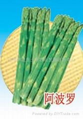 阿波罗-芦笋种子