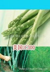 美国UC3000-芦笋种子